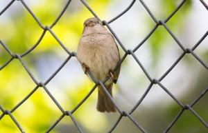 Vogel auf dem Maschendrahtzaun