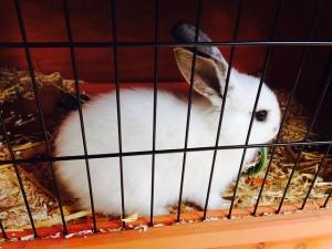 hare-414917_640